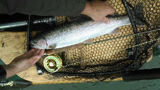 2015_Fly_Fising_Steelhead_Trinity_River_Guided_Trip