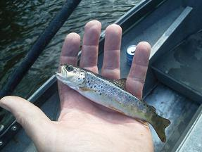 Beautiful Baby German Brown Trinity River CA