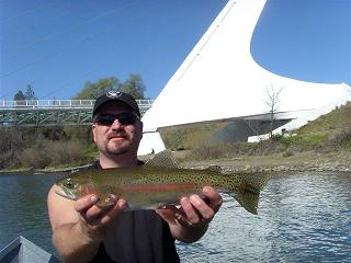 Nice Rainbow Trout